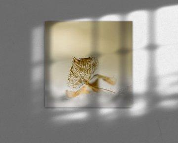 Veraknting van een Hortensia von Ingrid Van Damme fotografie