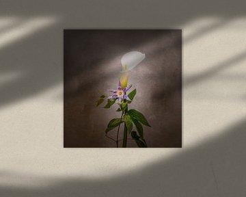 Sierlijke bloemen - Calla en Clematis | Vintage stijl van Melanie Viola