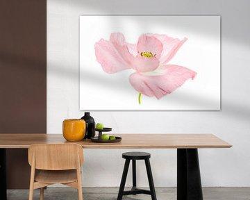 Klaproos roze soft van Tanja van Beuningen