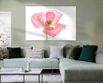 Mohn rosa 2 von Tanja van Beuningen