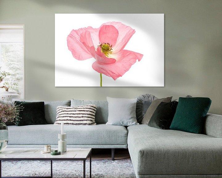 Beispiel: Mohn rosa 2 von Tanja van Beuningen