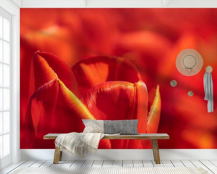 Sfeerimpressie behang: Rode Hollandse tulp close up van Michel Seelen