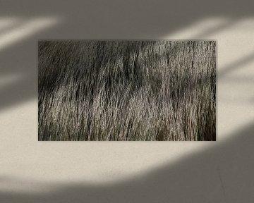 Duingras - Gras op de Duinen - Helm - Helmgras - Geschilderde Tekening
