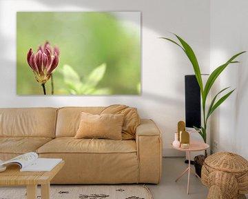 Blüte in Knospe von Annet van Esch