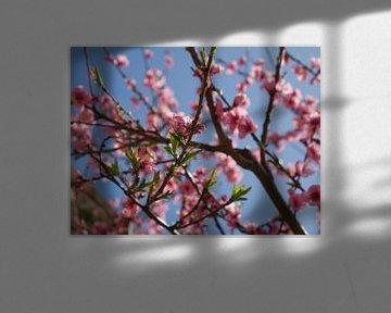 Roze bloesem tegen strak blauwe lucht (Pink blossom) van Evy Bakker