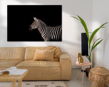 Zebra mit schwarzem Hintergrund von Lindy Schenk-Smit
