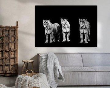 drei Tiger in einer Reihe mit schwarzem Hintergrund von Lindy Schenk-Smit
