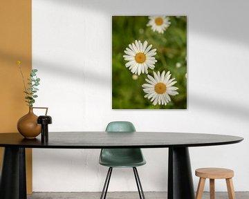 weiße Blumen von Stuart De vries