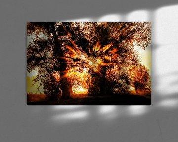 Lever de soleil Wijle sur Rob Boon