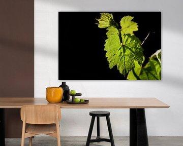 Wijnstokblad in de lente van Ulrike Leone