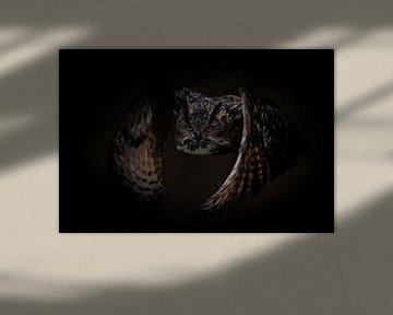 Uilen: Vliegende oehoe uil