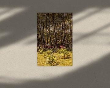 Lage Bergse Bos - Schotse hooglander nr. 2 van Deborah de Meijer