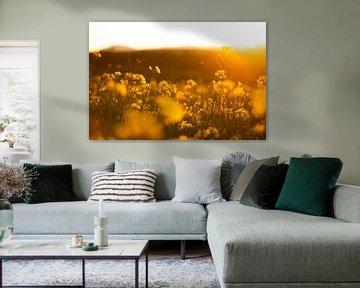 Rapsfeld im Sonnenuntergang von Lisa Becker