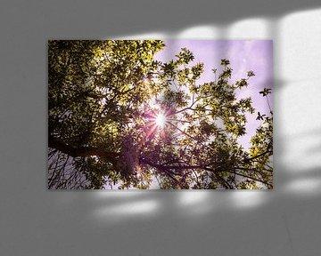 Lage Bergse Bos - Sonne Nr. 2 von Deborah de Meijer