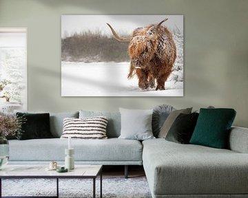 Schotse hooglander stier in de sneeuw van Richard Guijt Photography