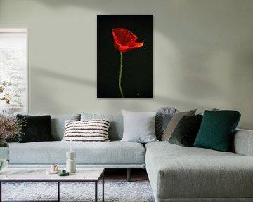 Klaproos schilderij - Rode Klaproos van Christine Nöhmeier