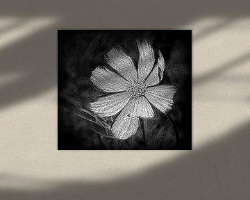 Der Kosmos Blume von Jose Lok