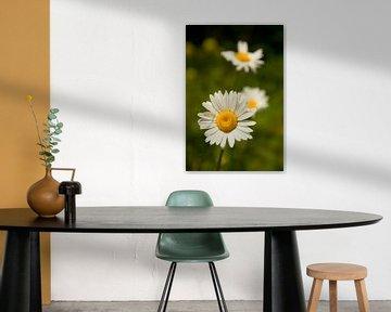 Sommerblume von Sabina Meerman