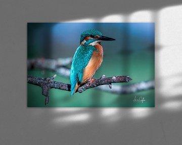 KIngfisher / Eisvogel von Ad van Geffen