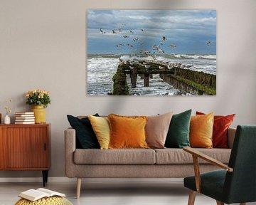 Möwen auf Wellenbrecher von MSP Canvas