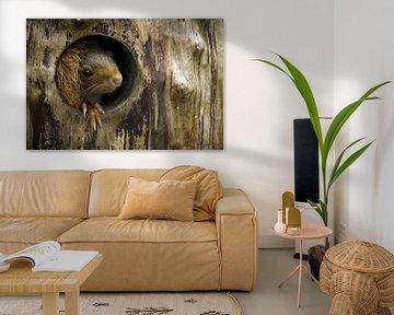 Eichhörnchen von Esther Bax
