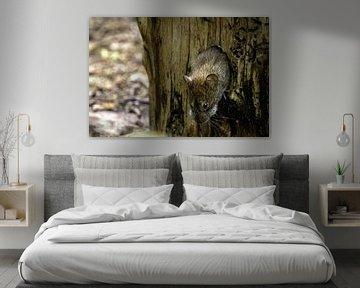 Maus kommt aus dem Baum von Esther Bax