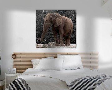Elefant von Christine Vesters Fotografie