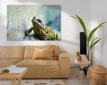 Der Frosch von Niek Traas