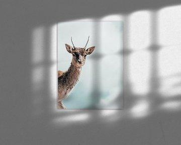 Hello, my deer von Colin Bax