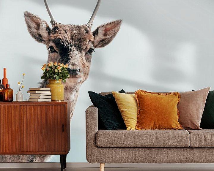 Beispiel fototapete: Hello, my deer von Colin Bax