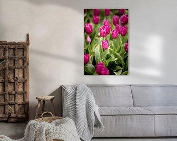 Blumenfeld im Frühling mit rosa Tulpen | Fine Art Natur Fotokunst von Karijn | Fine art Natuur en Reis Fotografie