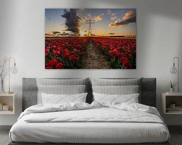 Rood tulpenveld tijdens zonsondergang van Dafne Vos
