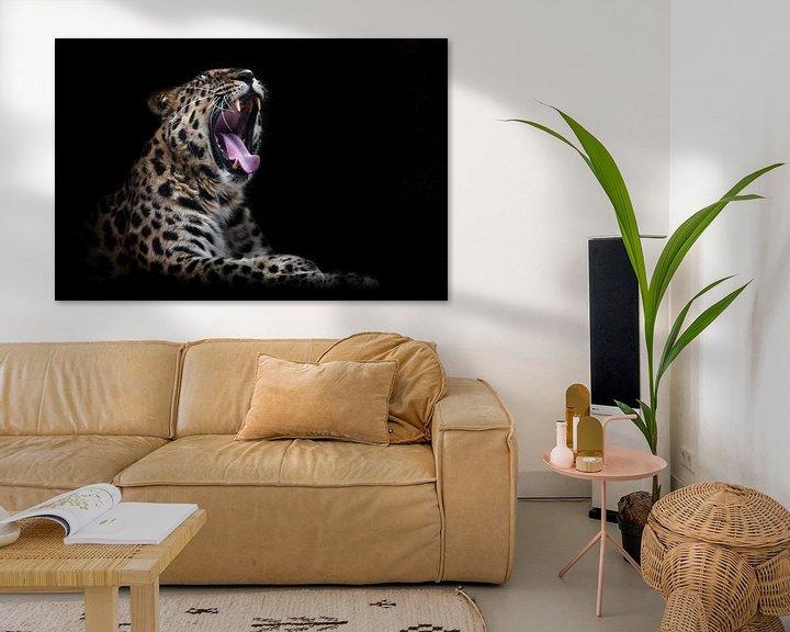 Beispiel: Hungriger Leopard, Amur Fernost mit offenem Maul schwarzer Hintergrund, isoliert von Michael Semenov