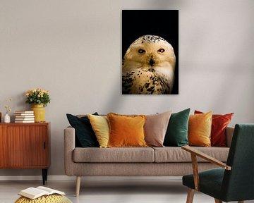 In the dark serie Snow Owl van Lynlabiephotography