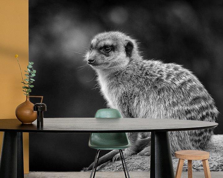 Beispiel fototapete: Erdmännchen von Rob Boon