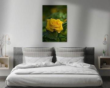 Gelbe Rose von Anja B. Schäfer