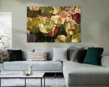 Leuchtende Tulpen in der Sonne von Anja B. Schäfer