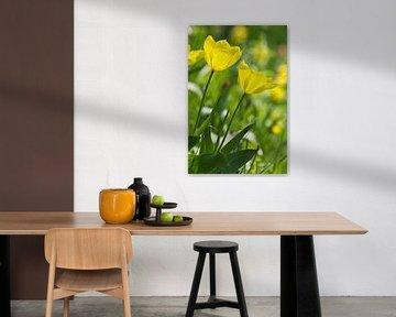 Gelbe Tulpen in der Sonne von Anja B. Schäfer