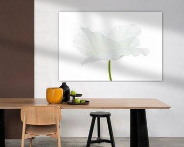 Weißer Mohn auf weißem Hintergrund von Tanja van Beuningen