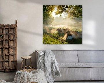 Koeien in de ochtendnevel in een Limburgs landschap van Karin de Jonge