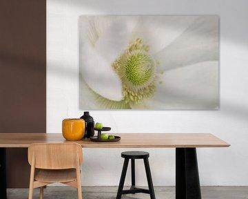 Anemone - Mystic White von Dagmar Hijmans