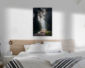Sonnenstrahlen im Wald von Marieke Smetsers