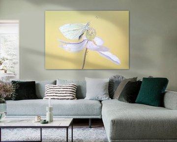 Schmetterling auf Blume von natascha verbij