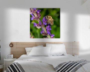 Makroaufnahme einer Honigbiene an der Lavendelblüte von Hans-Jürgen Janda