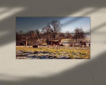 Paarden van Rob Boon