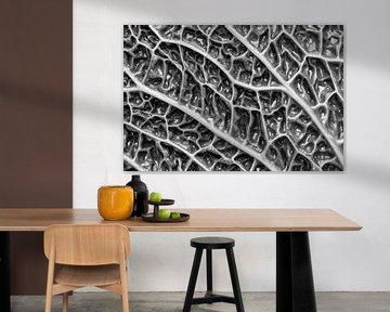 Wirsingkohl - Makro-Fotografie in Schwarz-Weiß