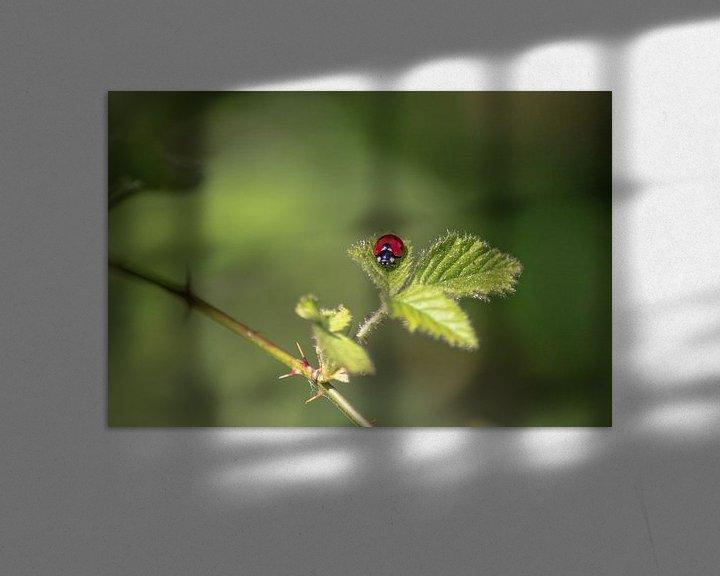 Sfeerimpressie: Een lieveheersbeestje op een blad van Thomas Winters