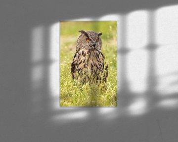 Uhu, Bubo Bubo, Greifvogel von Gert Hilbink