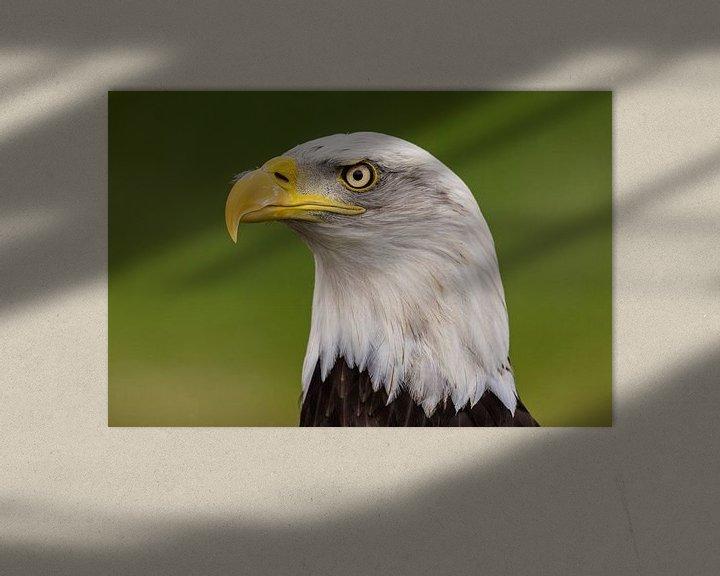 Beispiel: Der Weißkopfseeadler, American Bald Eagle. von Gert Hilbink
