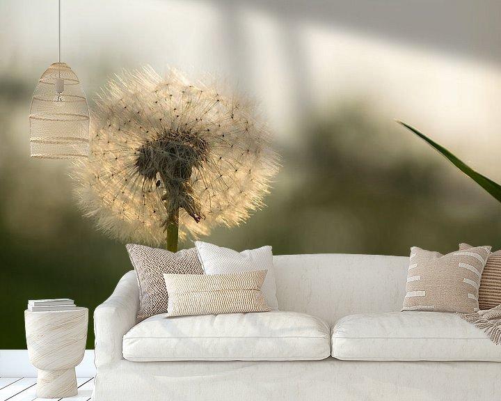 Impression: Peluche de pissenlit au soleil du soir sur tiny brok